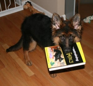 german shepherd tips